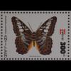 Schmetterlinge Calithea philotima Parthenos sylvia Niederländische Antillen