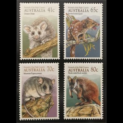 Australien Tiere des Hochlandes Riesengleitbeutler Schlafbeutler Felskänguruh