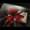 Australien 2006 Michel Nr. Block 58 Wildblume Waratah