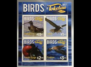 Tokelau Inseln 2017 Block 66 Fauna Vogelwelt Seabirds Seevögel Ornithologie