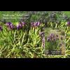 Palästina State of Palestine 2017 Block 63 Iris Nationalblume Flora Schwertlilie