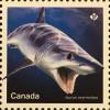 Kanada Canada 2018 Block 277 Haie Fische Knorpelfische Fauna Meeresbewohner