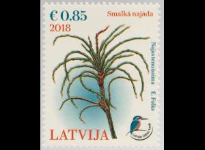 Lettland Latvia 2018 Nr 1052 Lettischer Naturfonds Nixenkraut Unterwasserpflanze