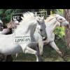 Kroatien Croatia 2018 Neuheit Geschützte Pferderassen Lipizzaner Tiere Horse