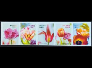 Schweden Sverige 2019 Nr. 3262-66 Tulpen Blumen Flora aus Markenheft