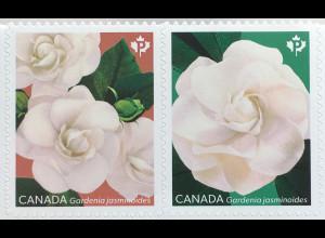 Kanada Canada 2019 Neuheit Gardenien Blumen Flora Zierpflanzen Rötegewächse
