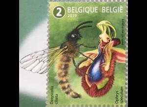 Belgien 2019 Neuheit Außergewöhnliche Bestäuber Tierarten Fauna Schmetterling