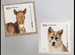 Island Iceland 2019 Neuheit Farmtiere Fohlen und Hundebaby Fauna Bauernhof