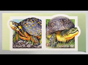 Kanada Canada 2019 Neuheit Gefährdete Schildkrötenarten Wasser- Landschildkröte