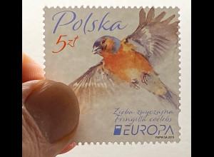 Polen Polska 2019 Neuheit Europaausgabe Einheimsiche Vogelarten Birds Uccello
