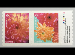 Kanada Canada 2020 Neuheit Dahlien Blumen Flora Korbblütler Blüten