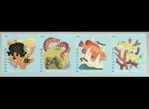USA Amerika 2020 Neuheit Korallenriff Riffe Lebensraum Unterwasservegetation