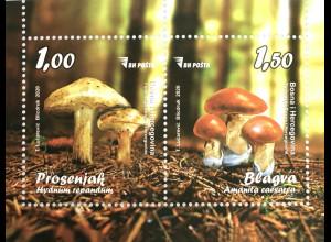 Bosnien Herzegowina Neuheit Einheimische Pilzarten Stoppelpilz Oranger Wulstling