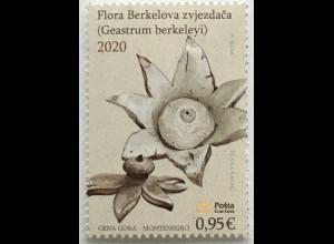 Montenegro 2020 Neuheit Erdbilz Ersdsterne Geastrum berkeley Flora