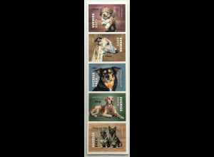 Schweden Sverige 2020 Neuheit Hunde beliebte Haustiere Fauna Dogs Cani Säugetier
