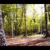 Makedonien 2011 Block 23 Europa Der Wald