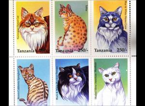 Katzen beliebte Haustiere Silber Tabby Persian Burmakatze Britisch Kurzhaar