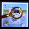 Vögel 1 Motivblock Spreo superbus Coracias caudata Vögel in freier Wildbahn