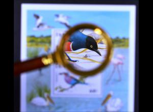Vögel Motivblock Spreo superbus Coracias caudata Vögel in freier Wildbahn