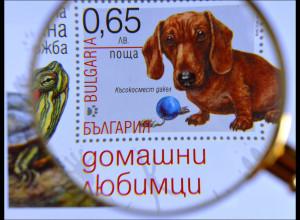 Süßer Dackel und eine Schildkröte auf einem Briefmarkenblock aus Bulgarien