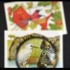 Fauna und Flora Ostafrikas Zebras bei Wasserstelle Vögel beim Fressen 2 Blöcke