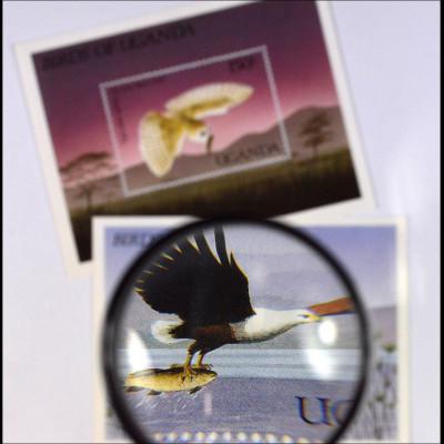 Schreiseeadler Haliaeetus vocifer Afrikanische Schleiereule Tyto alba affinis