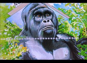 Berggorilla Gorilla gorilla beringei und Nilpferd Hippopotamus amphibius