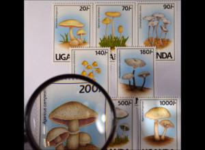Pilze Mykologie Satz 8 Werte verschiedene Pilzarten Volvariella bingensis
