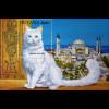 Katzenrassen Kartäuserkatze Türkisch Angora Maine Coon Chinchilla-Perser