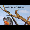 Einheimische Säugetiere Animals aus Guyana Ratten Opossum Affen Monkey