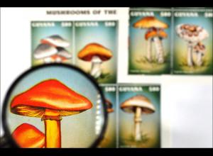 Pilze Mushrooms Orangeroter Ritterling Schöner Täubling Gürtelfuß Ackerling