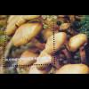 Pilze Mushrooms Grünblättriger Schwefelkopf Stupfer Saftling Stockschwämmchen