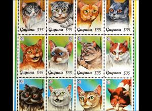 Katzenrassen cats Siamkatze Türkisch Van Schwarzer Perser Abessinier Burma