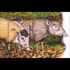 Afrikanische Fauna Buschschwein Schimpanse Stachelschwein Blockpaar