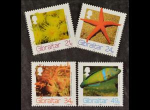 Gibraltar 1994, Nr. 696-99, Meerestiere: Purpurstern, Warzenkoralle, Lippfisch
